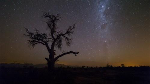 Vía Láctea y árbol