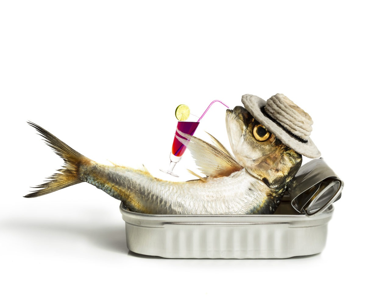 Is Fish Good For You?