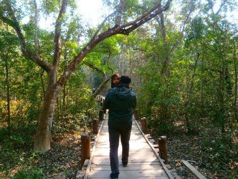A narrow path for visitors is provided for people to view the jungle.