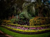 melbourne-fitzroy-gardens-conservatory-flowers-5