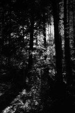 black-spur-rainforest-monochrome-079
