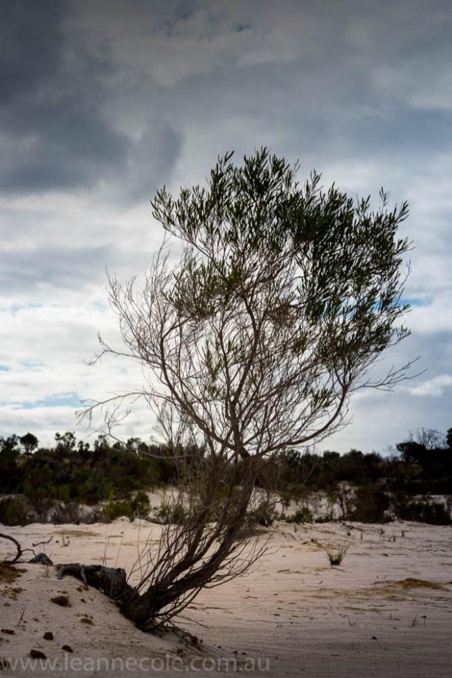 lake-albacutya-fires-sand-dunes428