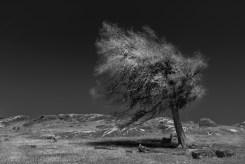 batesford-dogs-rocks-australia439