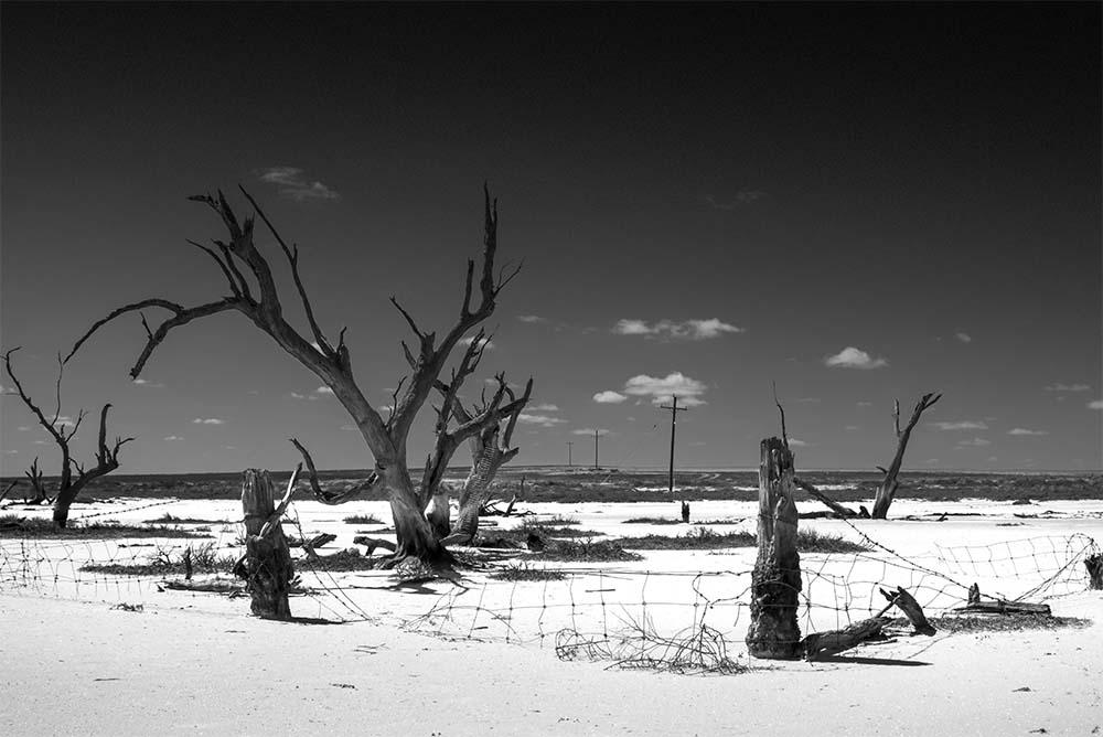 saltpans-deadtrees-enironment-nyahwest-australia