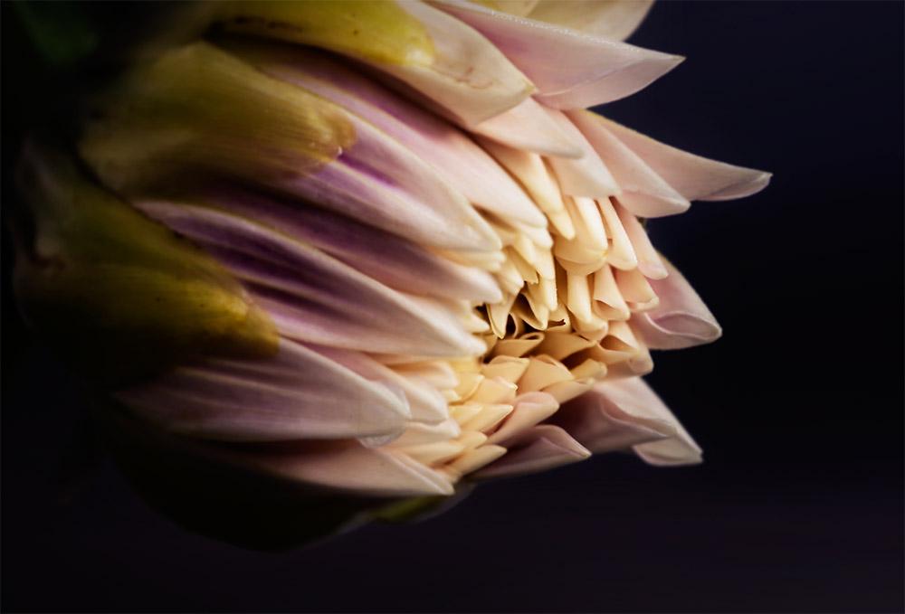 flower-mifgs-macro-melbourne