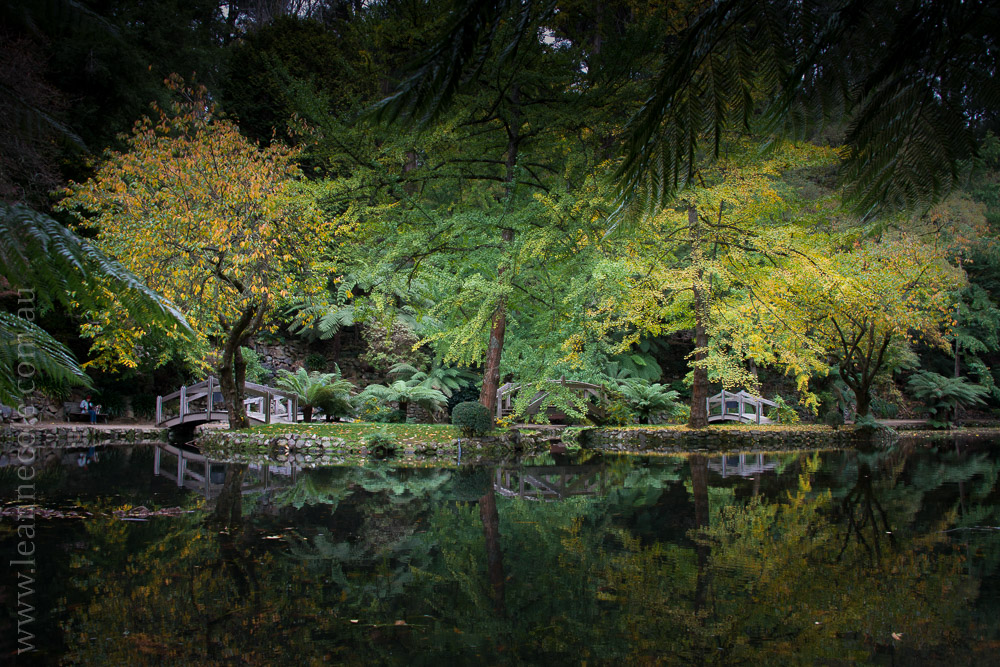 alfrednicholas-gardens-flowers-lake-dandenongs-4301