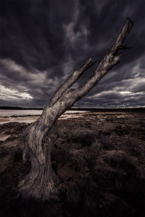pinklakes-dead-tree-cloudy-murraysunsetnatpark