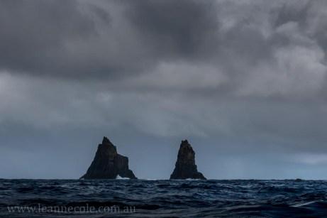 bruny-island-southcoast-cliffs-cruise-4656