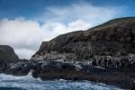 bruny-island-southcoast-cliffs-cruise-4728