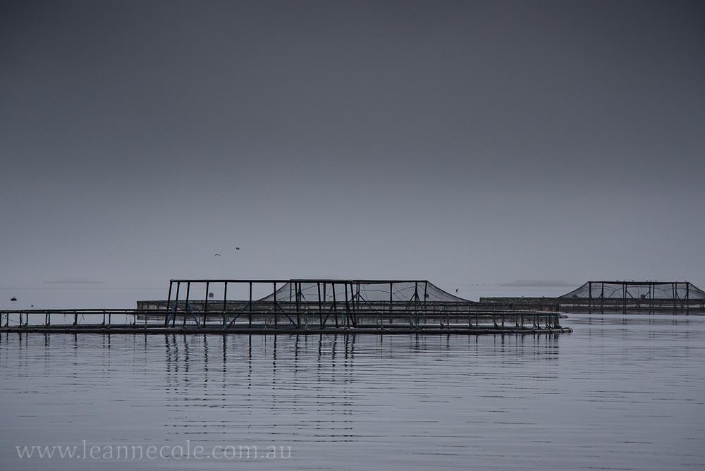 tasmania-strahan-worldheritage-gordon-river-3373