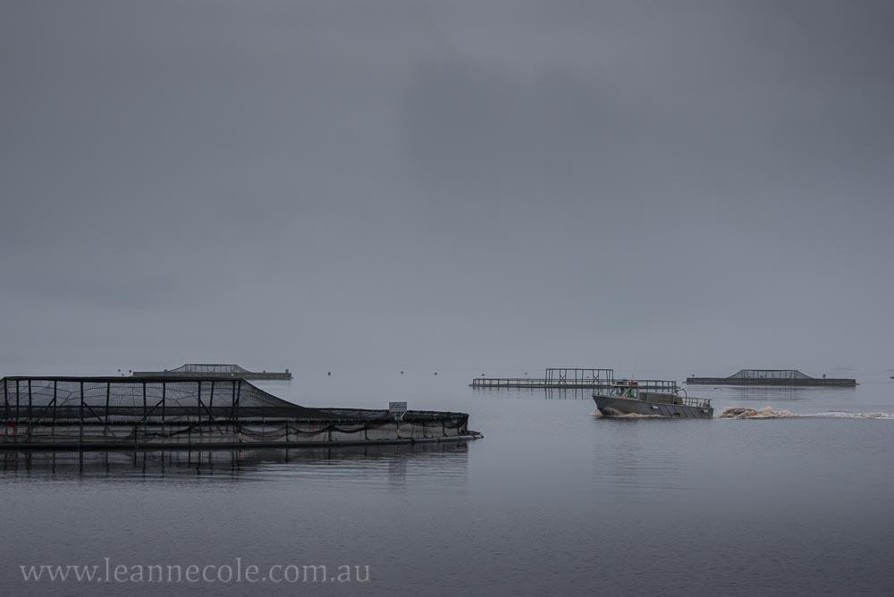 tasmania-strahan-worldheritage-gordon-river-3391