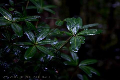 tasmania-strahan-worldheritage-gordon-river-3878