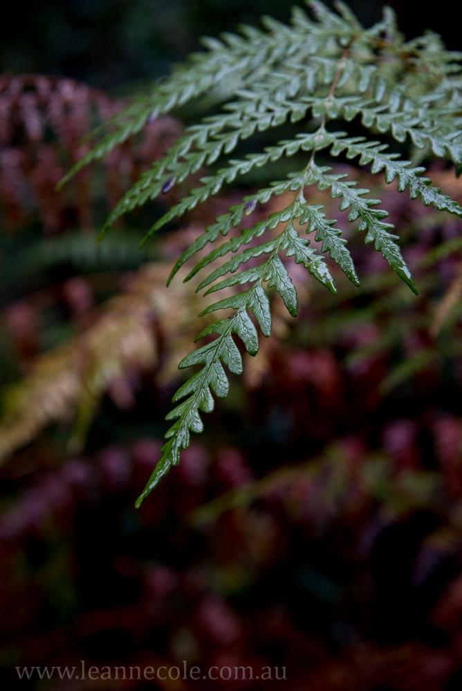 tasmania-strahan-worldheritage-gordon-river-3883