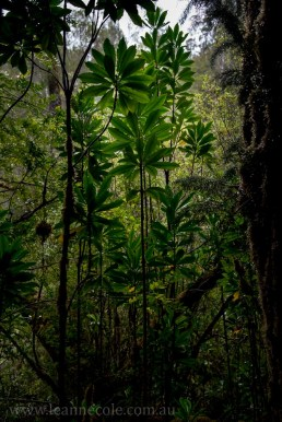 tasmania-strahan-worldheritage-gordon-river-3925