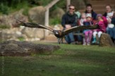 healesville-sanctuary-spirits-of-the-sky-0484