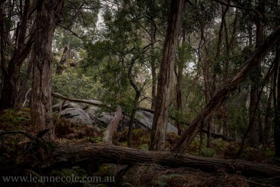 castlemaine-mountain-rocks-bushland-fog-7777