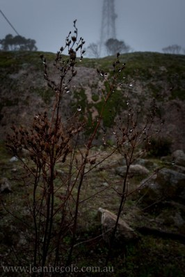 castlemaine-mountain-rocks-bushland-fog-7836