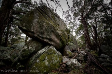 castlemaine-mountain-rocks-bushland-fog-8260