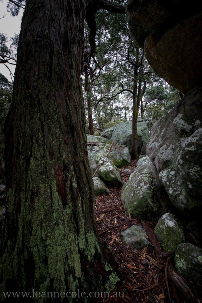 castlemaine-mountain-rocks-bushland-fog-8267