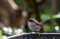 healesville-sanctuary-birds-australian-0883