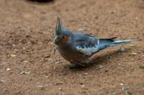 healesville-sanctuary-birds-australian-1041