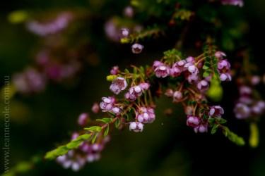 flora-healesville-sanctuary-lensbaby-velvet56-4707