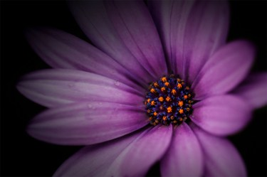 garden-flower-macro-ext-tube