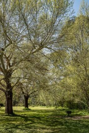 heide-banksia-park-landscape-flowers-100
