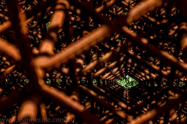 heide-banksia-park-landscape-flowers-104