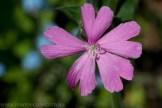 heide-banksia-park-landscape-flowers-106