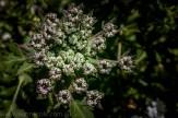 heide-banksia-park-landscape-flowers-108