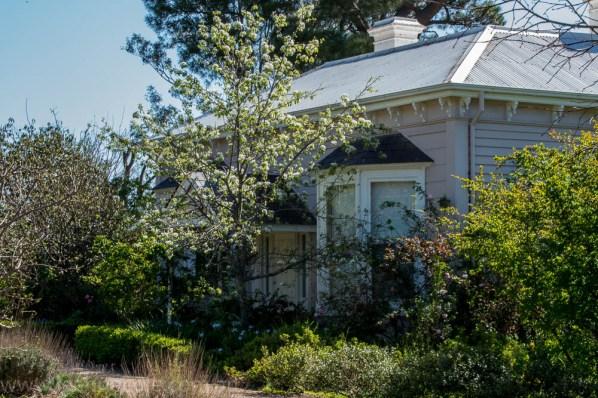 heide-banksia-park-landscape-flowers-111