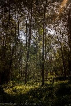 heide-banksia-park-landscape-flowers-116