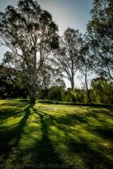 heide-banksia-park-landscape-flowers-119
