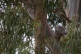 melbourne-banyule-flats-birds-106