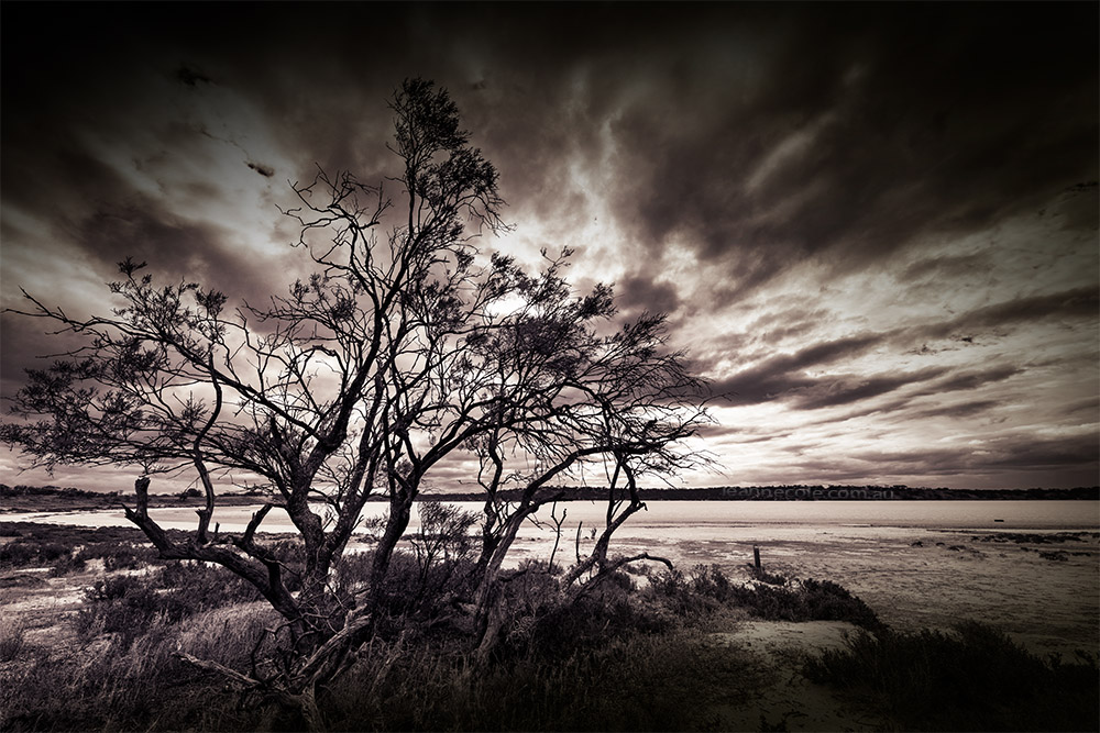 pink-lakes-tree-underbool-monochrome