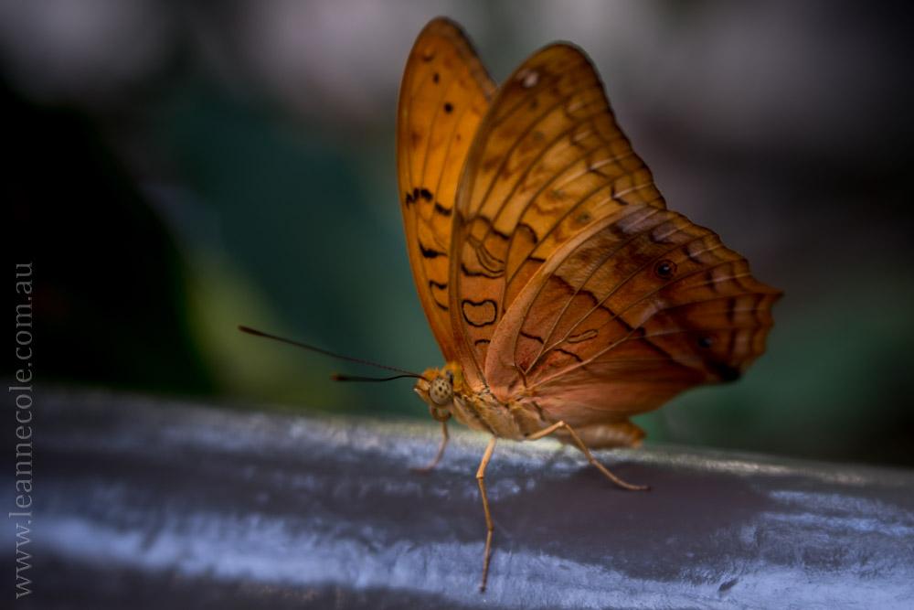 zoo-butterfly-house-lensbaby-velvet56-5731