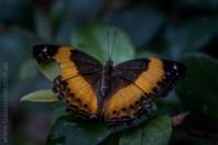 zoo-butterfly-house-lensbaby-velvet56-5740