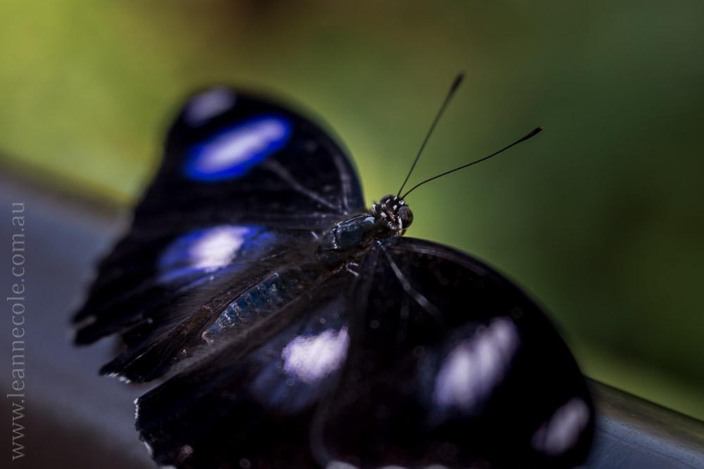 zoo-butterfly-house-lensbaby-velvet56-5767