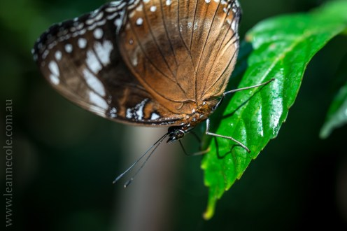 zoo-butterfly-house-lensbaby-velvet56-5820