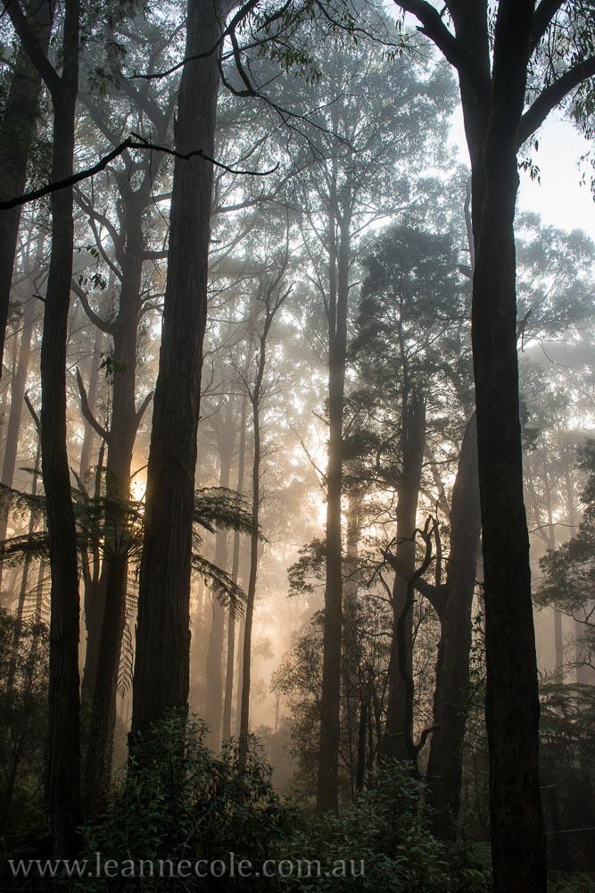 bonnie-doon-fog-winter-1026