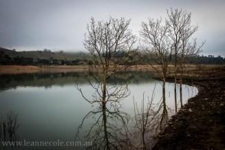 bonnie-doon-fog-winter-1036