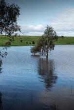 cairn-curran-reservoir-newstead-8062