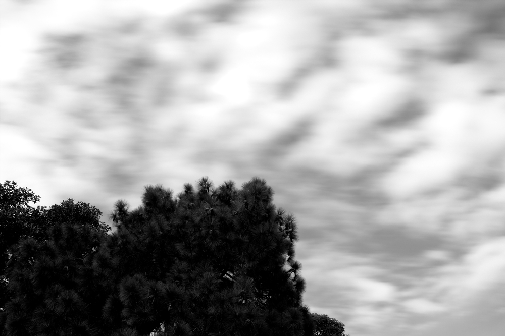 bluring-clouds-and-tree-small-stupidityhole