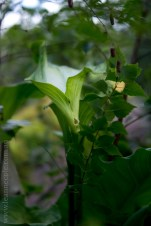 alowyn-gardens-lensbaby-velvet56-yarraglen-2014