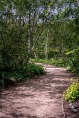 alowyn-gardens-lensbaby-velvet56-yarraglen-2038