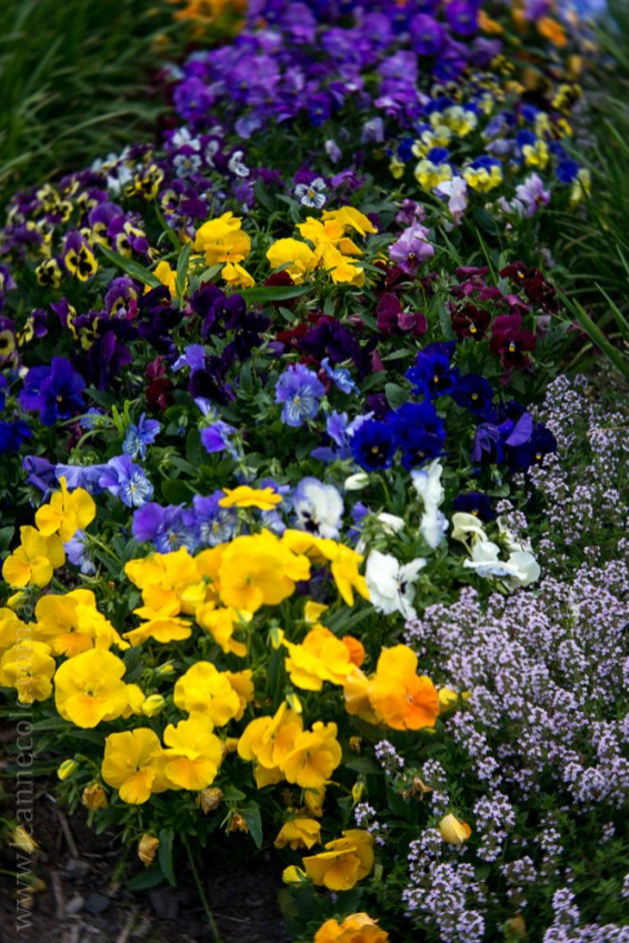 alowyn-gardens-lensbaby-velvet56-yarraglen-2342