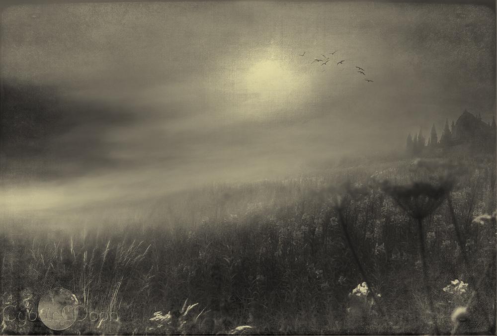 lupin-fields-sepiasmall