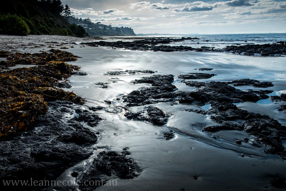 flinders-pier-morning-morning-0222