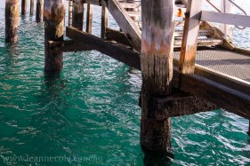 flinders-pier-morning-morning-0270
